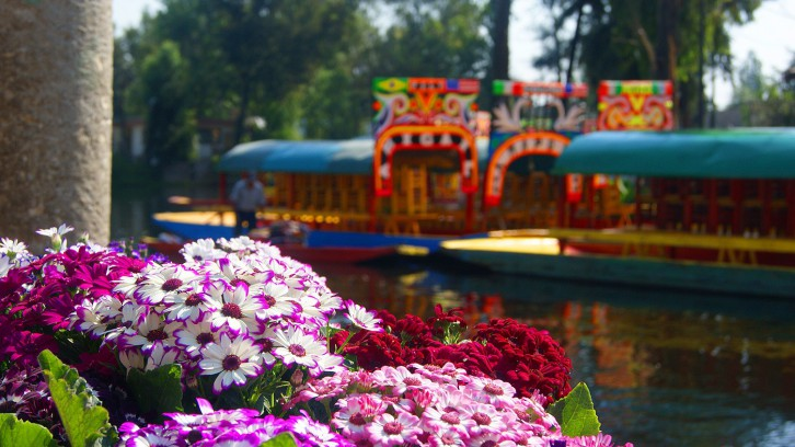 Flower of Xochimilco