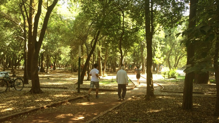 Morning run in Chapultepec on the Gandhi circuit